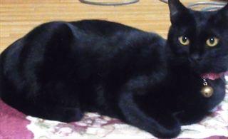 <捜しています>1歳の雑種猫(黒・雌)