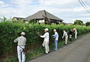 道路に面する静元寺の矢竹の生垣の手入れの様子=佐賀市本庄町