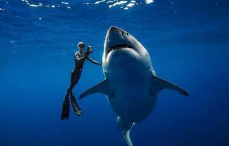 米ハワイ沖で巨大ザメの撮影成功