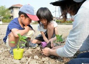 ピーマンの苗を植えるきょうだい=佐賀市神野西