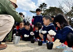 ポットにドングリをまく園児=伊万里市山代町の楠久保育園