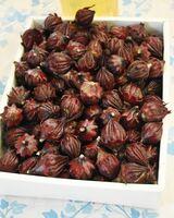 今年収穫されたローゼルの果実