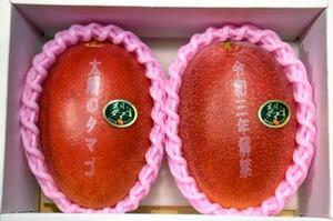 最高値20万円で落札された完熟マンゴー「太陽のタマゴ」=15日午前、宮崎市