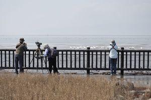 遊歩道の柵越しに鳥たちを撮影する人たち