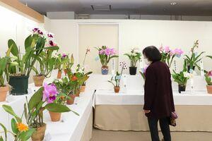 さまざまな種類の洋ランが楽しめる「第54回春の佐賀洋蘭展」=佐賀市の佐賀玉屋本館6階