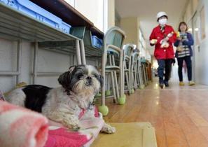 環境省、ペット救護基準を改訂
