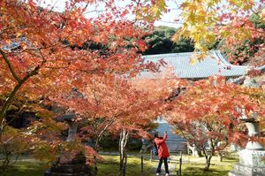 参道を包むように伸びたモミジが赤く色づいた廣福寺=武雄市武雄町