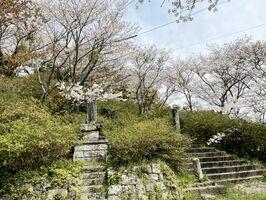 桜の後はツツジが楽しめる高尾山公園