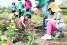夏の花壇楽しんで 園児らが植え替え