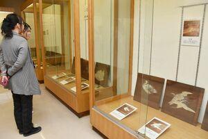 1枚の板に動植物などが描かれた中尾神社の天井絵展=多久市多久町の市郷土資料館