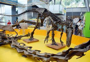 全長8・5メートルのアロサウルスの全身骨格(レプリカ)。手前は28メートルあるディプロドクスの一部=武雄市の宇宙科学館