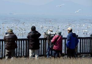 陽気の下、盛んに飛び交う野鳥を撮影するカメラマン=佐賀市東与賀町の有明海干潟(撮影・中島克彦)