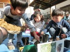 ドングリの苗を植え替える園児たち=佐賀市の三光保育園(提供)