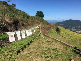 風でひらひらと揺れる展示Tシャツ=有田町の岳の棚田