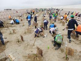 高田松原があった場所に松の苗木を植える植樹参加者たち。写真は昨年の様子=岩手県陸前高田市