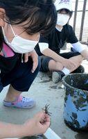 生物の特徴を観察して種類を確かめる参加者=佐賀市の東与賀干潟