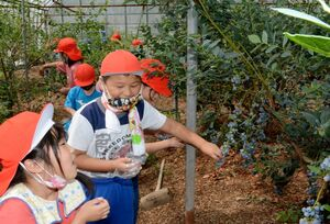 ブルーベリーを楽しそうに収穫する児童たち=嬉野市塩田町五町田