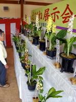 展示会で、出品されたラン科のエビネ=佐賀市大和町の道の駅大和そよかぜ館