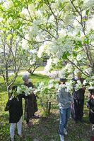 ナンジャモンジャに見入る地元住民ら=神埼市神埼町枝ケ里の大圓寺
