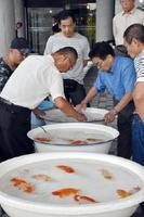 高級金魚「らんちう」を品評する審査員ら=佐賀市の県立博物館