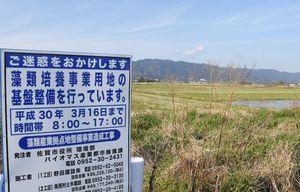 絶滅危惧種の生息が確認された造成予定地=佐賀市高木瀬町