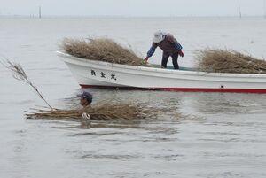 赤貝の着底を助けるバサラ立ての作業=塩田川河口沖