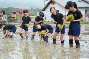 一列に並んで苗を植える児童たち=有田町の大山小の校田