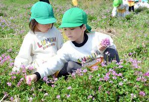 レンゲソウ摘みを愉しむ園児たち=有田町岳地区の棚田