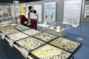 チョウなどの標本や広用紙にまとめられた理科の研究成果が並ぶ県児童生徒理科作品展=武雄市の県立宇宙科学館