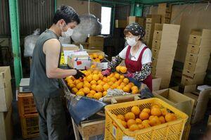 かんきつ類などを取り扱っている「タラッタ」。新型コロナウイルスの影響でインターネット通販が増えている=藤津郡太良町(提供)