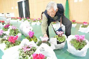 シクラメンを選ぶ来場者=佐賀市川副町の佐賀県農業大学校