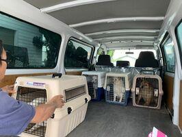 多頭飼育崩壊の現場からレスキューされた犬たち(提供写真)