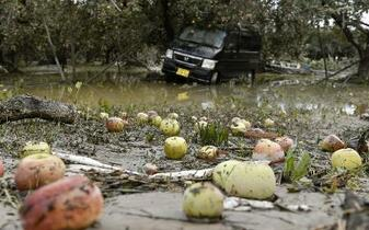 19年農業被害、4600億円