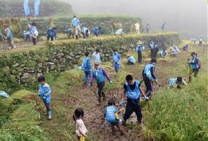実りの秋を迎え、棚田で稲刈りをし、収穫の喜びを実感する参加者ら=唐津市相知町蕨野