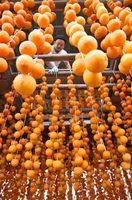小屋につるされ、ずらりと並ぶ柿=佐賀市大和町名尾
