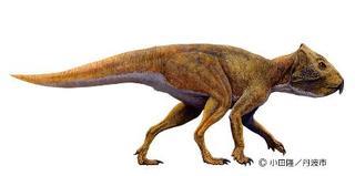 1億1千万年前地層から角竜類