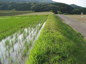 草刈り後34日、薬剤散布後19日目のあぜ。無処理の手前に比べ、奥は雑草の生育が抑えられている=伊万里市