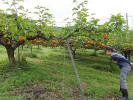 アグリジャパンが再生に取り組む伊万里新幸農園。ナシだけでなく、今後はキウイ栽培にも取り組む=伊万里市