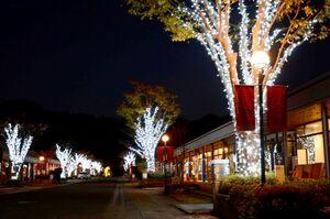 ライトアップされたアリタセラの並木=有田町赤坂