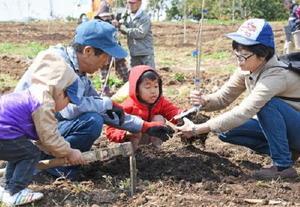 オリーブの苗木を懸命に植える参加者たち=鹿島市高津原