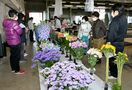 花生産者の栽培技術競う、佐賀県花き園芸共進会