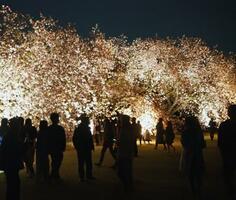 新宿御苑で開かれた夜桜のライトアップイベント=東京都新宿区(環境省提供)