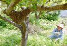 〈ちょっとした話〉ハート型の密バチ