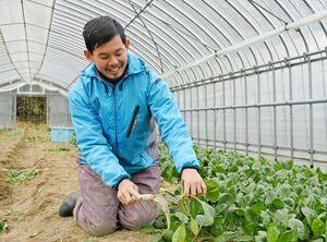 関東から移住してきた大平竜也さん。トレーニングファームでホウレンソウ栽培を学んでいる=佐賀市富士町藤瀬