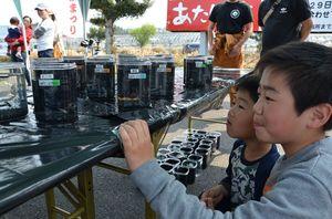 多彩なメダカを見つめる子どもたち=唐津市浜玉町のマリンセンターおさかな村