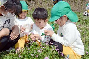 レンゲソウで造ったのブレスレットに笑顔を見せる園児=有田町岳地区の棚田