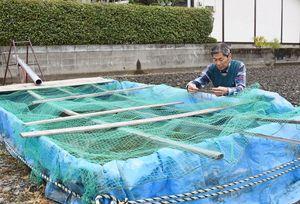 田んぼに据えた水槽で育てている菱の発芽状況を確認する本村宣行さん=神埼市千代田町