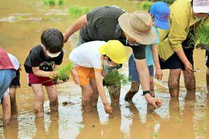 田んぼに入って苗を植える竹木場小の子どもたち=唐津市竹木場(提供)