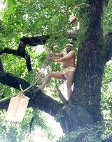 「旗上げ神事」で、神旗が付けられた竹を大イチョウに引き上げる神旗人=みやき町の綾部八幡神社