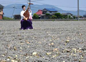 出荷されずにすき込まれたタマネギ畑の中で、琵琶を奏でる北原香菜子さん=白石町福田